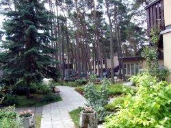 W-sosnowym-lesie7